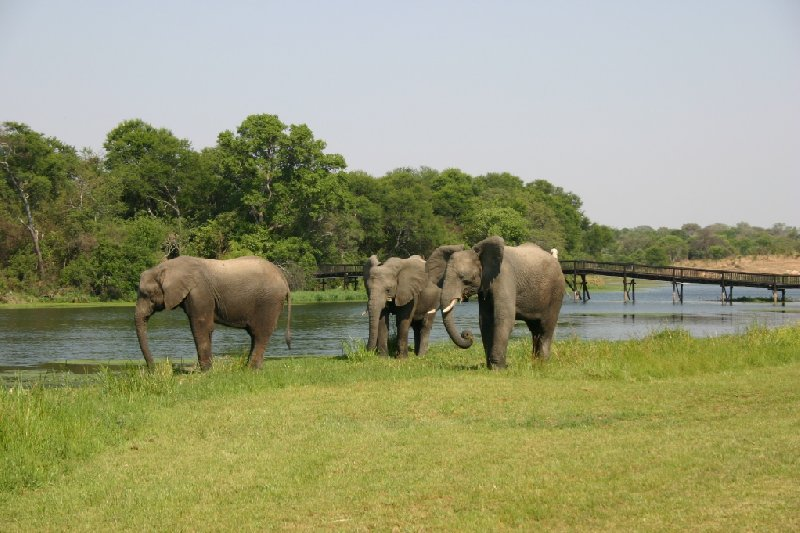 Gweru Antelope Park Zimbabwe Review Photo