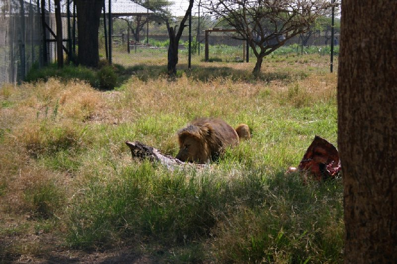 Gweru Antelope Park Zimbabwe Information