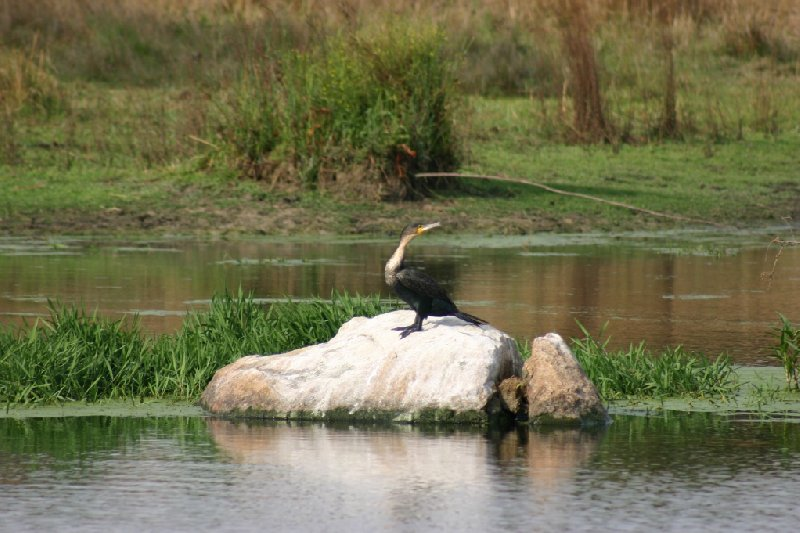 Gweru Antelope Park Zimbabwe Review Photograph