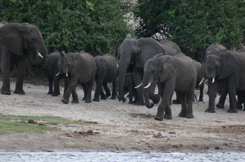 Chobe National Park Botswana Kasane Diary Photos
