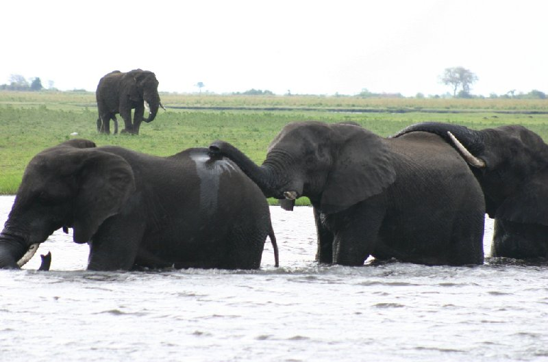 Chobe National Park Botswana Kasane Vacation Adventure