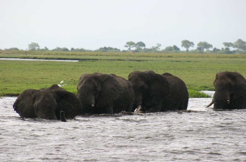 Chobe National Park Botswana Kasane Review Picture