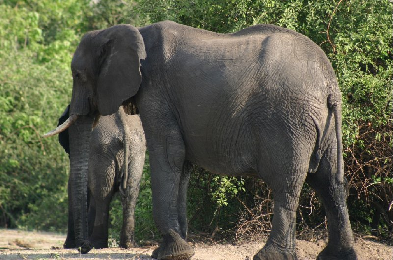 Chobe National Park Botswana Kasane Adventure