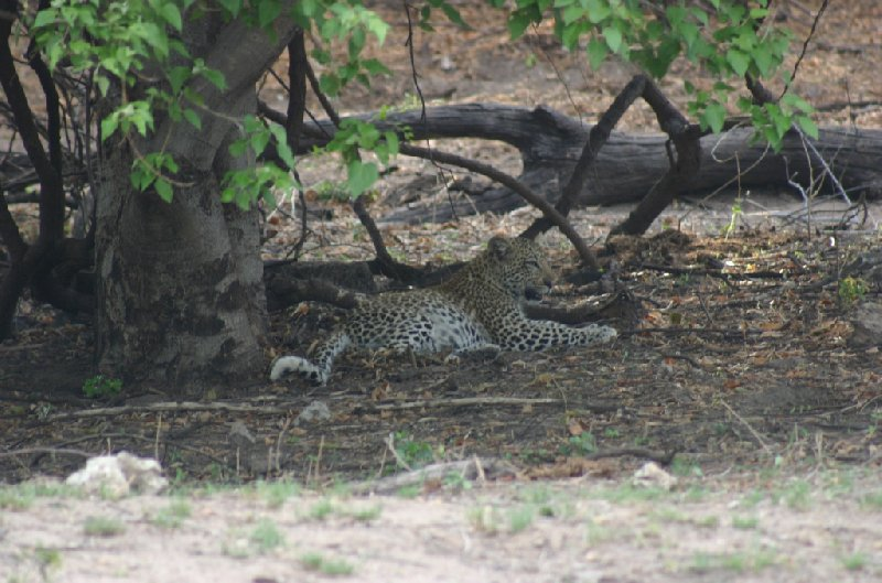 Chobe National Park Botswana Kasane Travel Blog