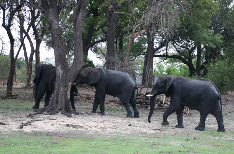 Chobe National Park Botswana Kasane Holiday