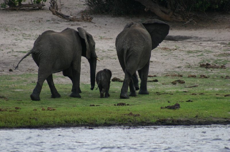 Chobe National Park Botswana Kasane Album Photos