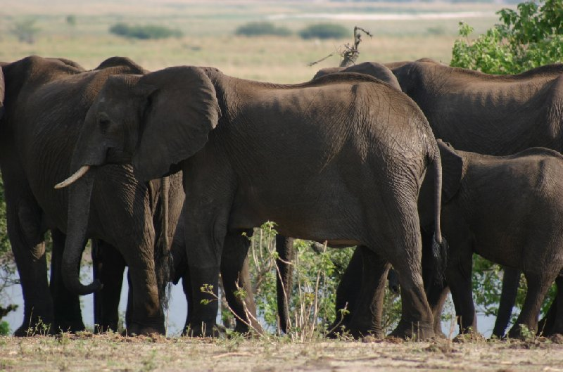 Chobe National Park Botswana Kasane Album Photographs