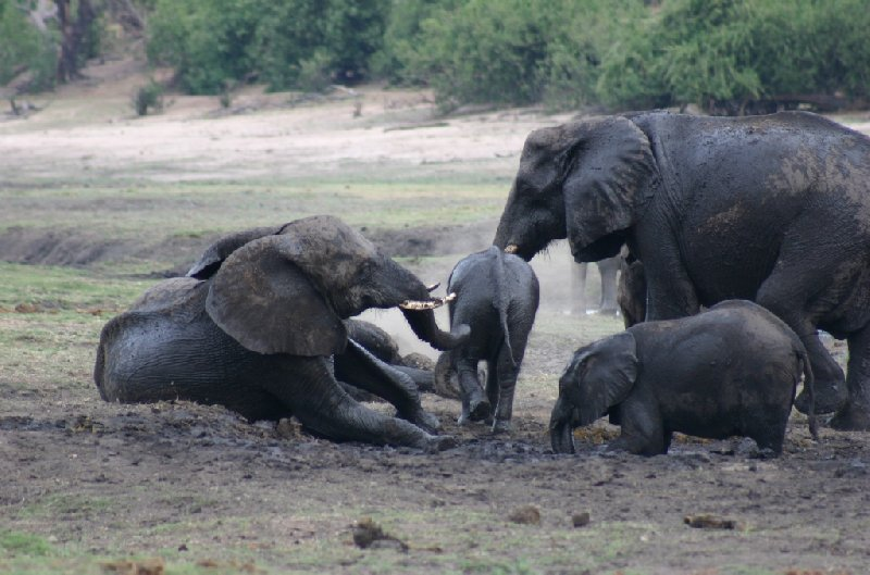 Chobe National Park Botswana Kasane Holiday Sharing