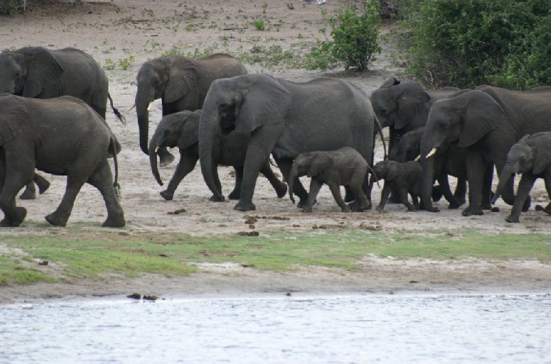 Chobe National Park Botswana Kasane Blog Review