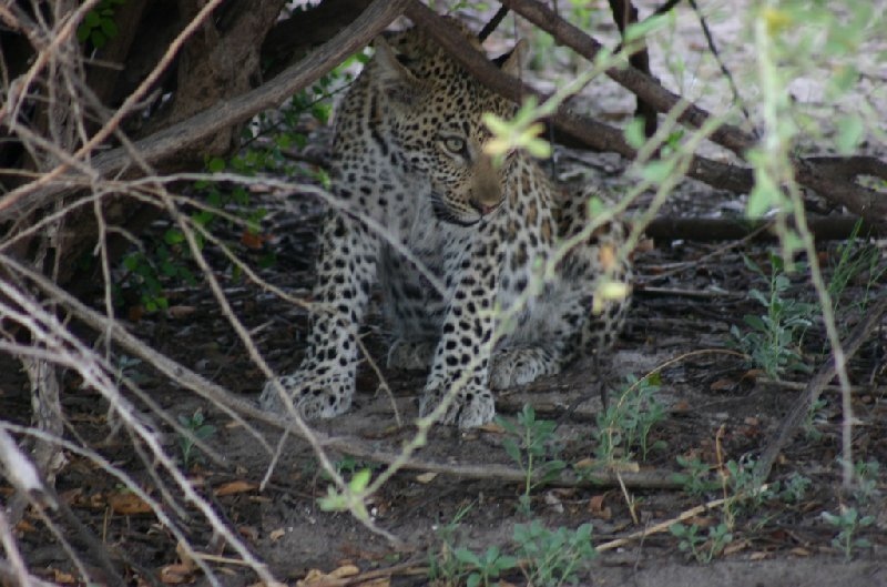 Chobe National Park Botswana Kasane Vacation Picture