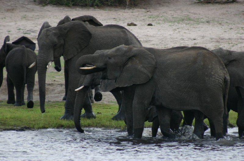 Chobe National Park Botswana Kasane Holiday Adventure