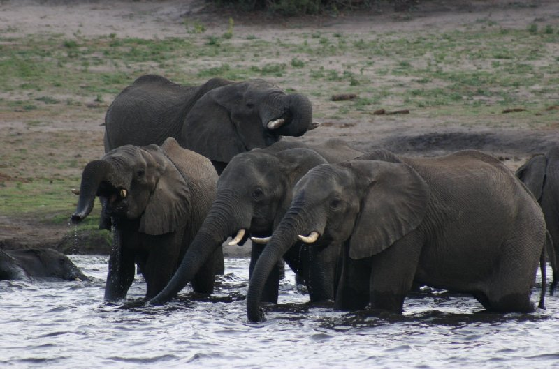 Chobe National Park Botswana Kasane Diary Pictures