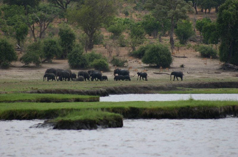 Chobe National Park Botswana Kasane Trip Photographs