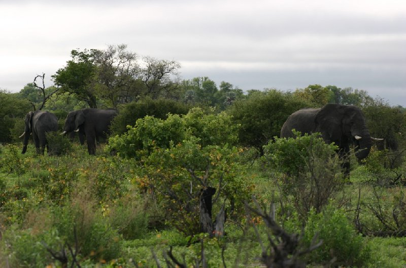 Chobe National Park Botswana Kasane Diary Photography
