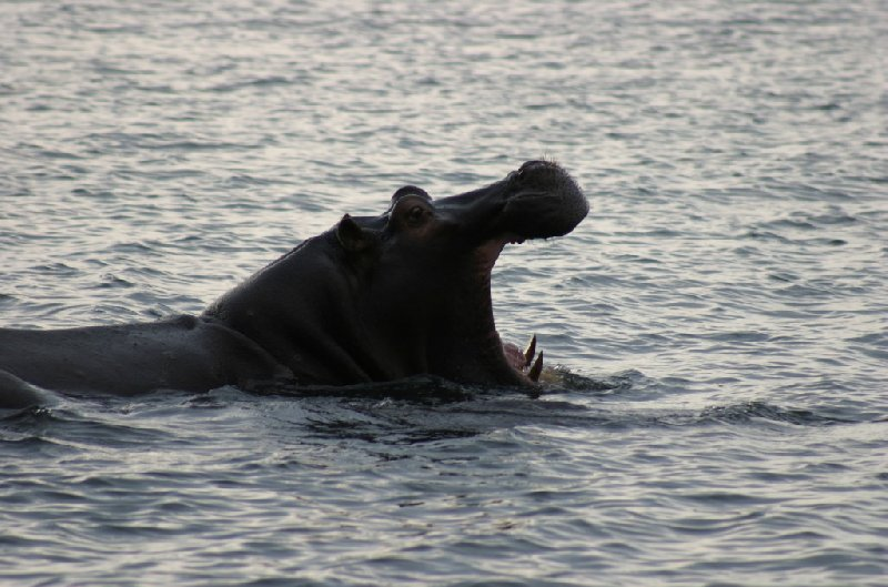 Chobe National Park Botswana Kasane Trip Vacation