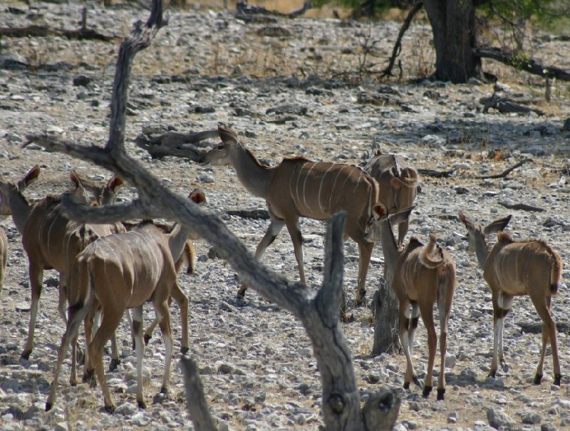Etosha National Park Namibia Okaukuejo Blog Photo