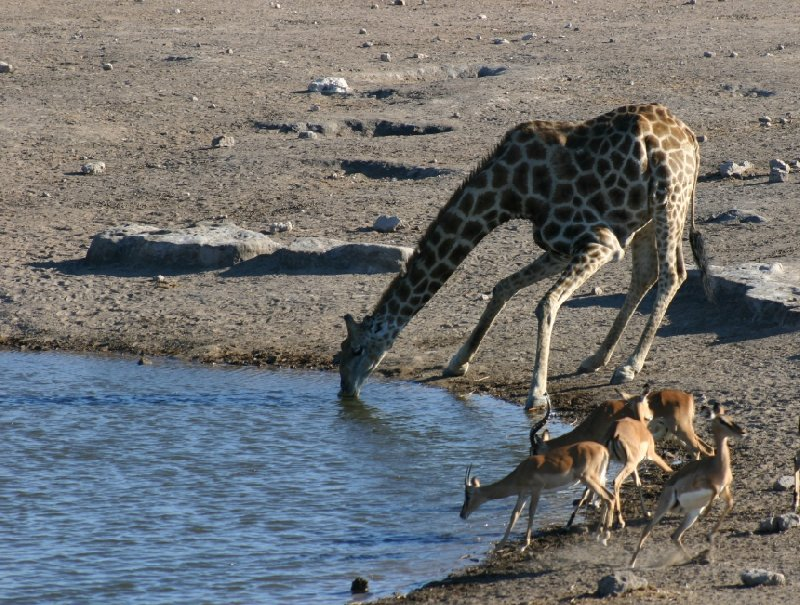 Photo Etosha National Park Namibia crossed