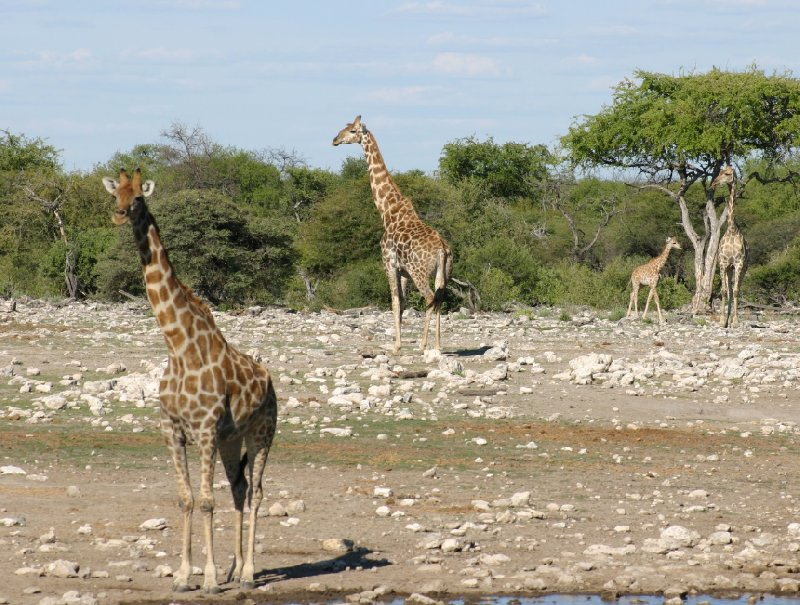 Photo Etosha National Park Namibia Namibia