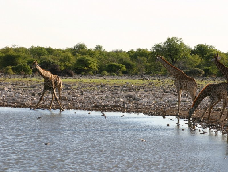 Etosha National Park Namibia Okaukuejo Trip Adventure