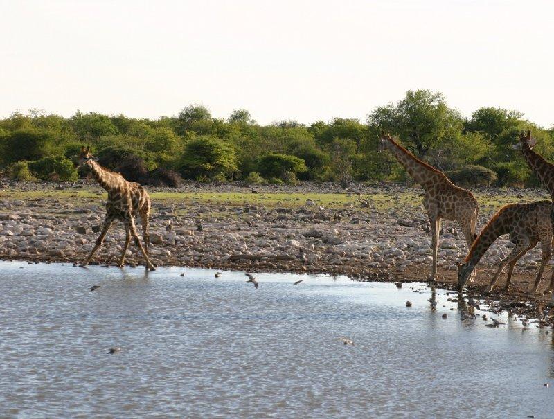 Okaukuejo Namibia Trip Adventure
