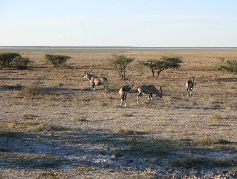 Etosha National Park Namibia Okaukuejo Vacation Experience