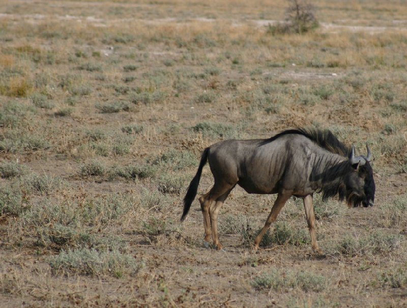 Etosha National Park Namibia Okaukuejo Review Photo