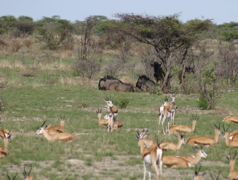 Etosha National Park Namibia Okaukuejo Travel Diary