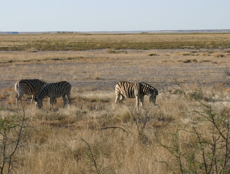 Photo Etosha National Park Namibia envolves