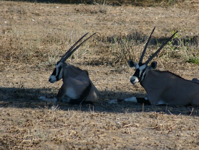Photo Etosha National Park Namibia around