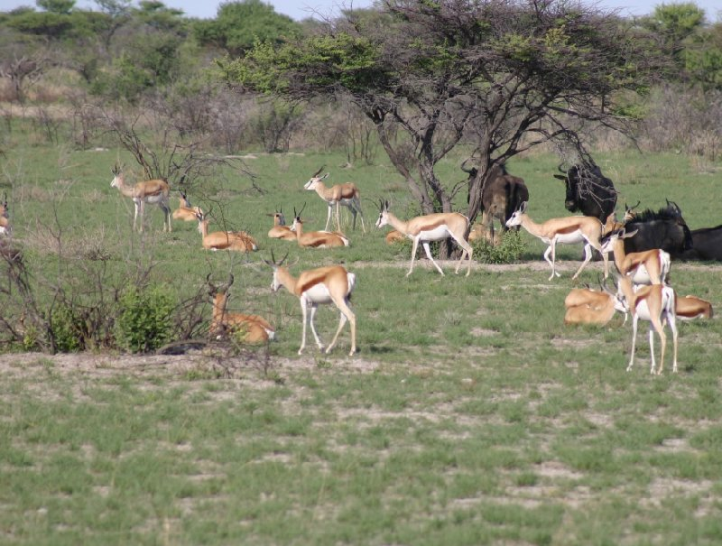 Etosha National Park Namibia Okaukuejo Blog Adventure