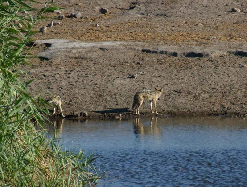 Etosha National Park Namibia Okaukuejo Diary Photos