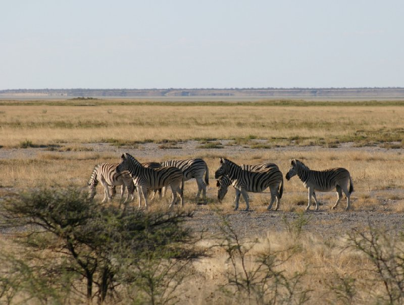 Etosha National Park Namibia Okaukuejo Travel Information