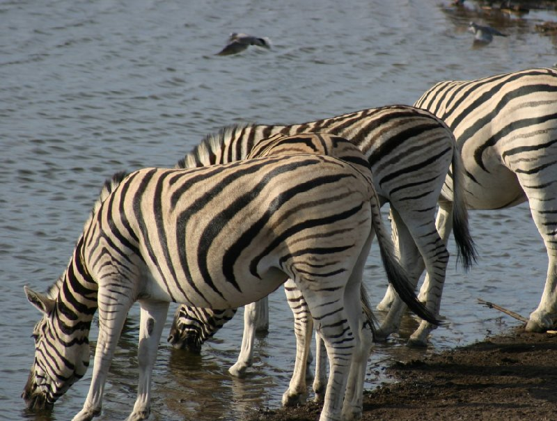 Photo Etosha National Park Namibia birdlife