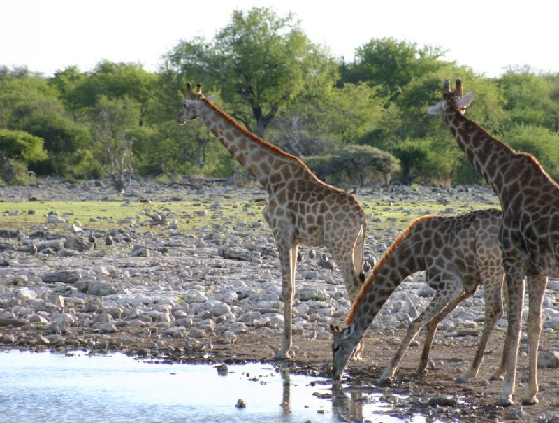 Photo Etosha National Park Namibia people