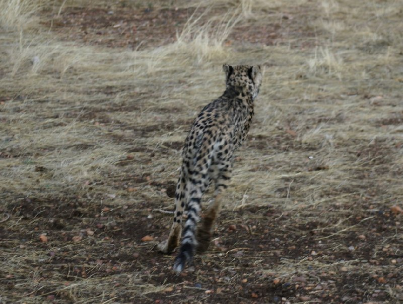 Photo Ojitotongwe Cheetah Park Namibia southwest