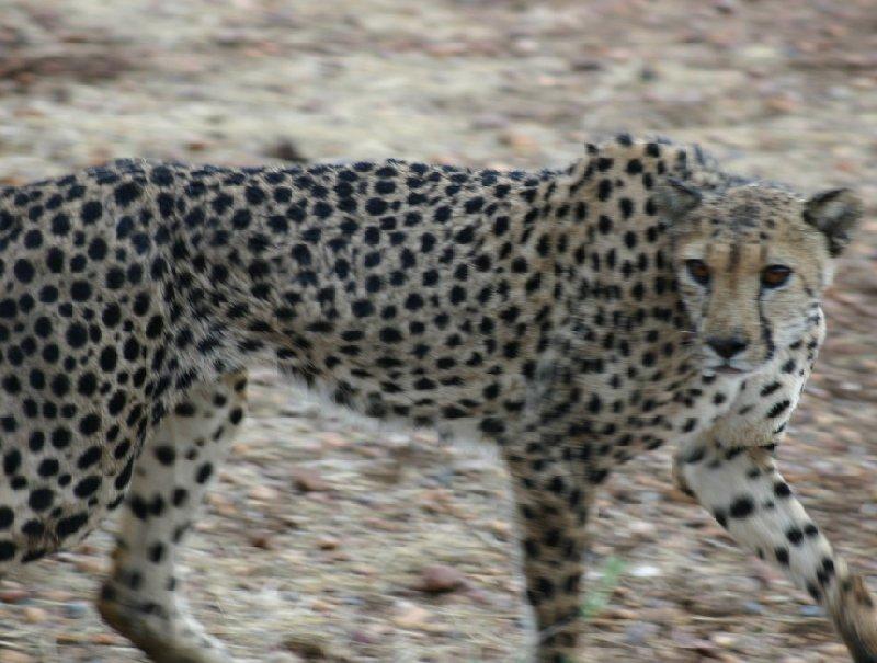 Ojitotongwe Cheetah Park Namibia Kamanjab Diary Sharing
