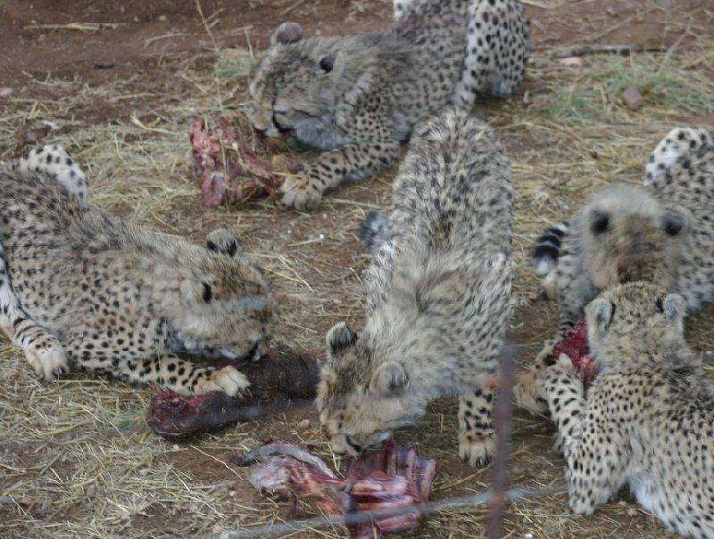 Ojitotongwe Cheetah Park Namibia Kamanjab Holiday Photos