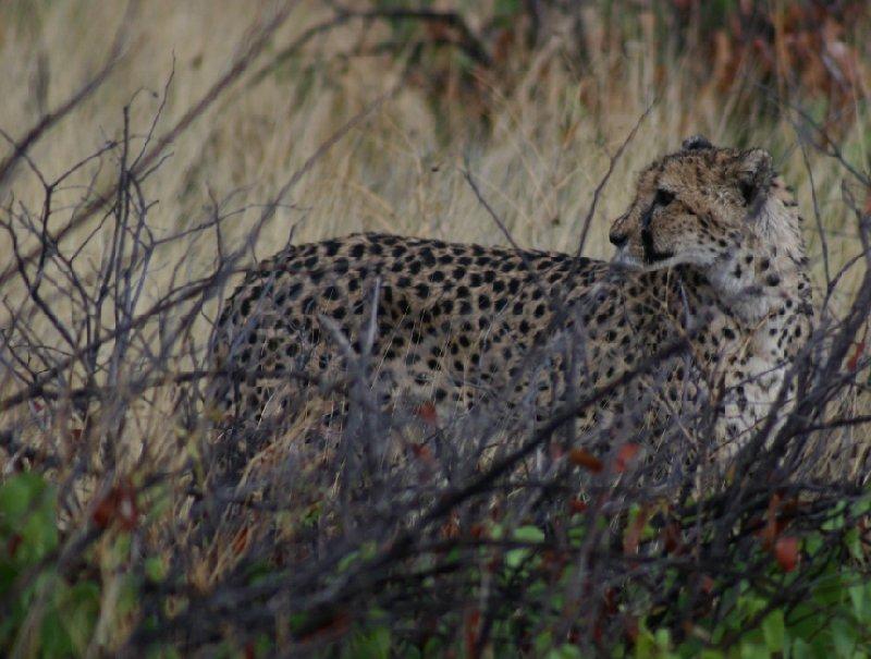 Ojitotongwe Cheetah Park Namibia Kamanjab Vacation Pictures
