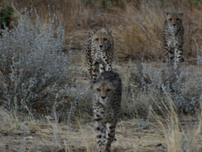 Photo Ojitotongwe Cheetah Park Namibia offers