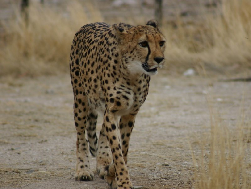 Photo Ojitotongwe Cheetah Park Namibia owners