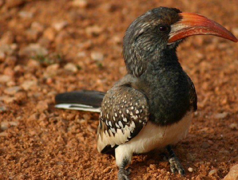 Kamanjab Namibia