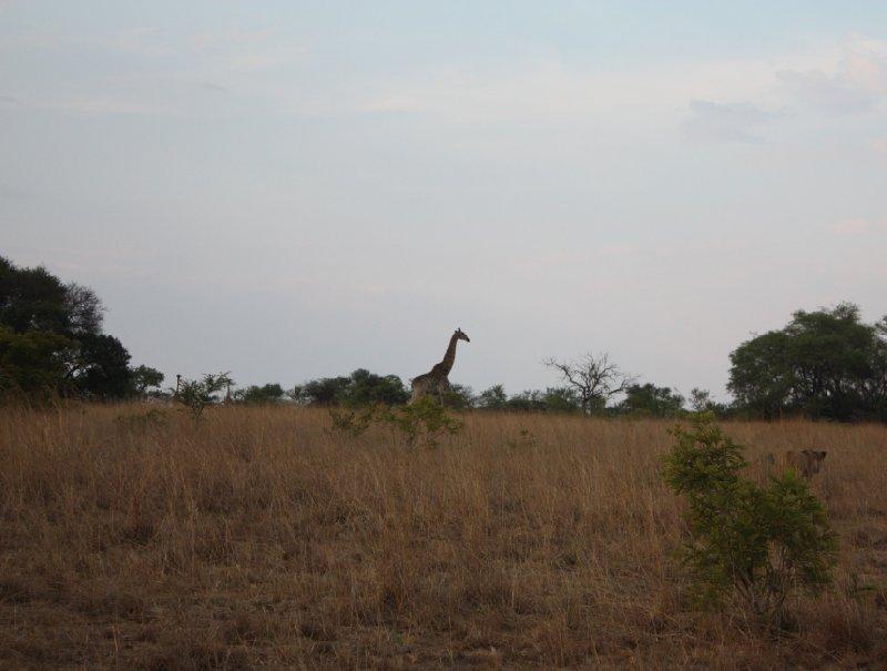 Gweru Antelope Park Zimbabwe Pictures