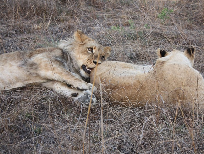 Gweru Antelope Park Zimbabwe Holiday Tips
