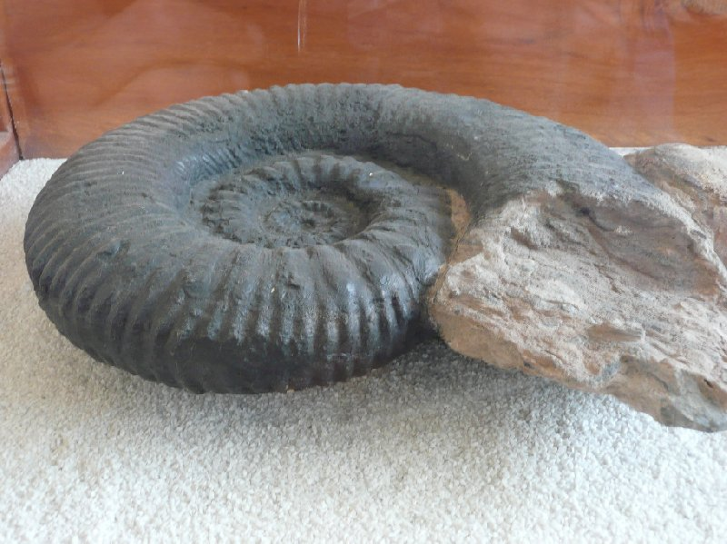 Photo Villa de Leyva Colombia fossil