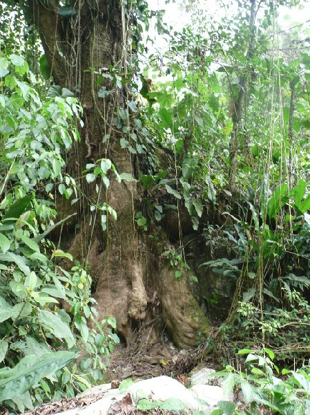 Ciudad Perdida trek Colombia Travel Package