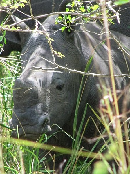 Photo Ziwa Rhino Sanctuary Uganda located