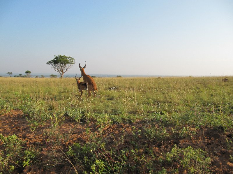 Uganda tours and safaris Masindi Trip Picture