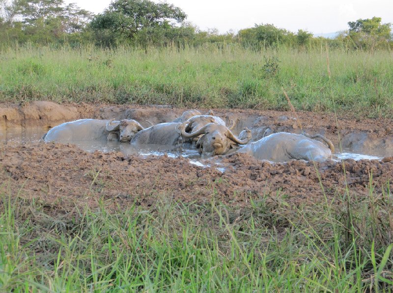 Uganda tours and safaris Masindi Photograph
