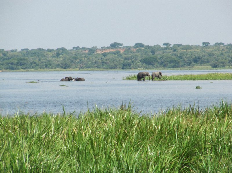 Uganda tours and safaris Masindi Blog