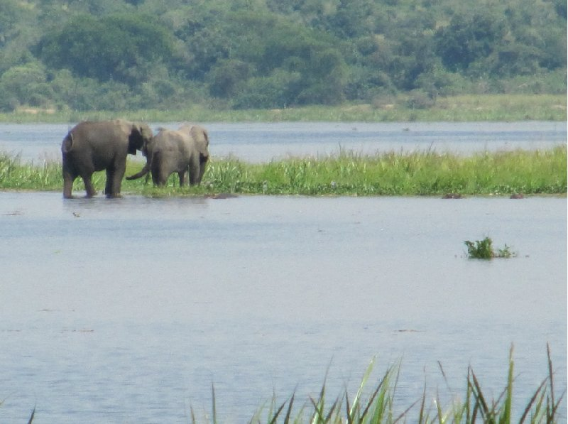 Uganda tours and safaris Masindi Vacation Experience